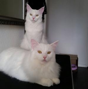 Bella en Ziva 9 maanden
